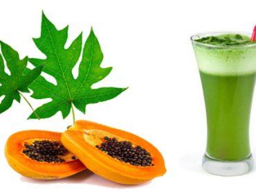 Hojas de papaya , propiedades medicinales