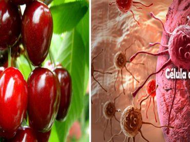 Frutos rojos para combatir el cáncer