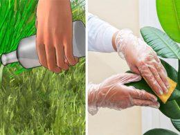 Plantas perfectas con una cucharada de canela