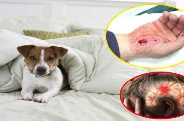 3 Animales con increíbles poderes curativos