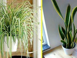 Plantas para purificar el aire del hogar