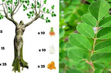 Árbol de moringa , propiedades medicinales