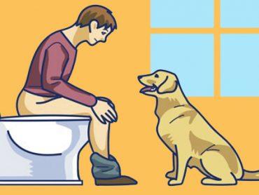 ¿Qué quiere comunicarte tu perro ?