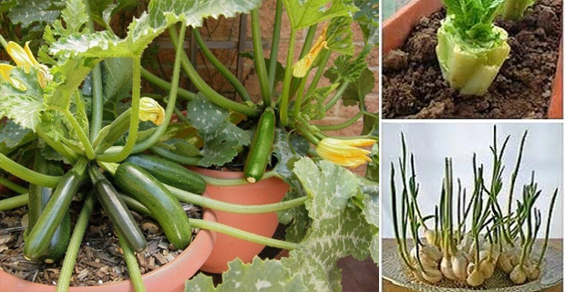 Cultivar verduras en casa conecta salud for Cultivar vegetales en casa