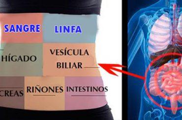 Aprende a desintoxicar cada órgano del cuerpo