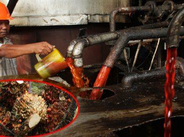 Productos que compras con aceite de palma sin saberlo