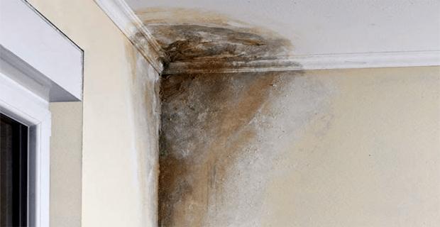 Soluci n para manchas de humedad en paredes conecta salud - Manchas humedad pared ...
