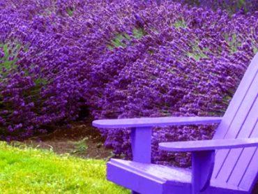 Plantas que te protegerán de los mosquitos para siempre