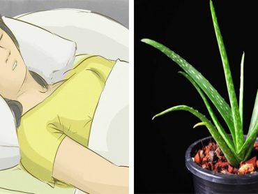 Plantas que No Deben Faltar en Tu Habitación Para un Placentero Descanso