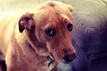 Antes de Reñir a Tu Perro Piénsalo 2 Veces. Comprueba lo que Pasa por su Mente