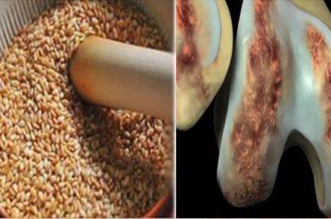 Semillas para Regenerar Tendones y Aliviar el Dolor de Rodillas