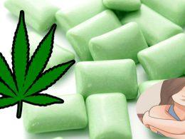 ¿Te Atreverías a Probar Goma de Marihuana para Aliviar el Dolor?