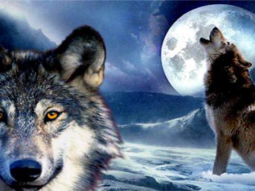 Parábola de los 2 Lobos , Tardarás 1 Minuto en Leerla y la Recordarás Toda la Vida