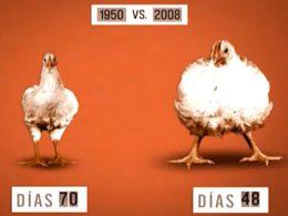 La Información Que No Debes Saber si Quieres Seguir Comiendo Pollo