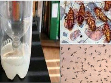 ¿Cansado de Insectos y sus Molestas Picaduras? Insecticida Casero para Mantenerlos Alejados