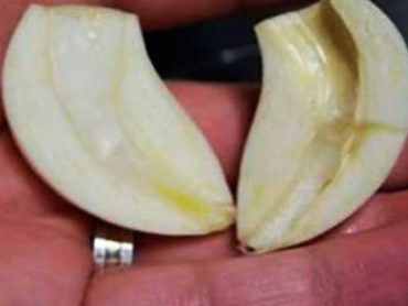 Jamás pensé que un simple diente de ajo podría curarme de tantas enfermedades