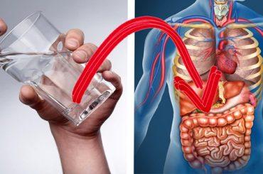 Esto es lo que Pasa Cuando de Beber Tomas Sólo Agua Durante 30 Días Seguidos