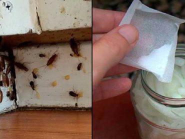La cucarachas mueren en manadas cuando preparas este remedio