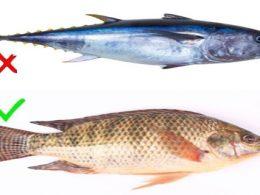 Alerta , 9 Tipos de Pescado que Deberías Evitar Comer