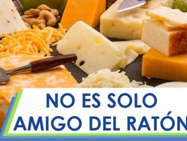 No dejes de comer Queso aunque estés a Dieta , es bueno hasta para los Ratones